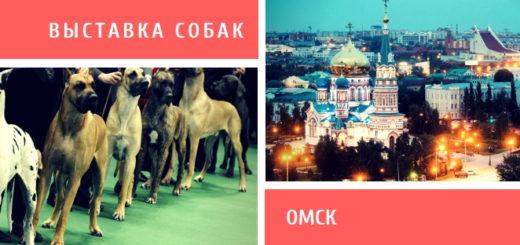Выставка собак в Омске