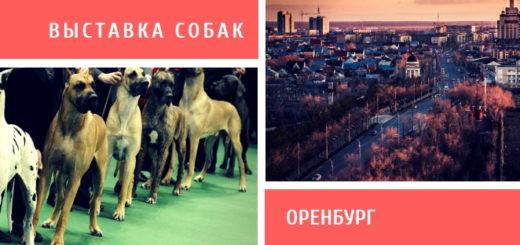 Выставка собак в Оренбурге