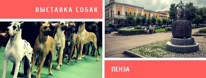 Выставка собак в Пензе