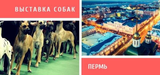 Выставка собак в Перми