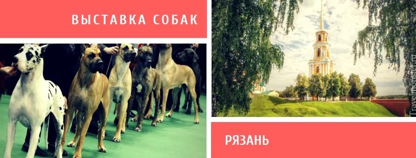 Выставка собак в Рязани