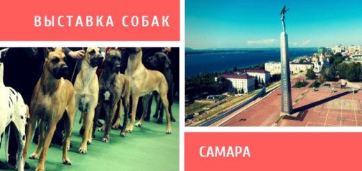 Выставка собак в Самаре