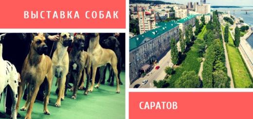 Выставка собак в Саратове