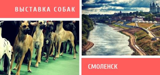 Выставка собак в Смоленске