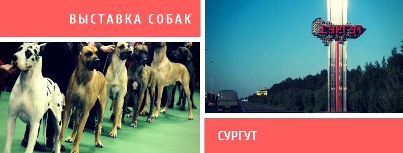 Выставка собак в Сургуте