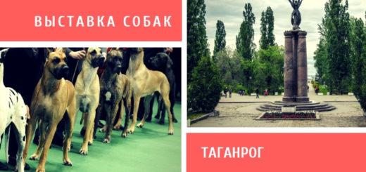 Выставка собак в Таганроге