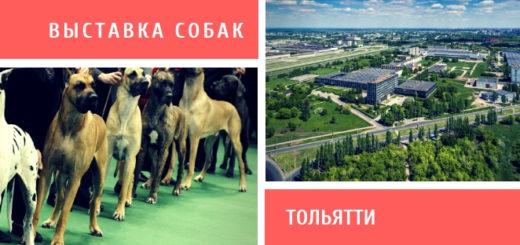 Выставка собак в Тольятти
