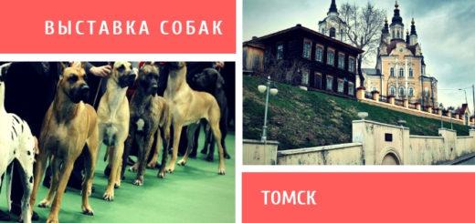 Выставка собак в Томске
