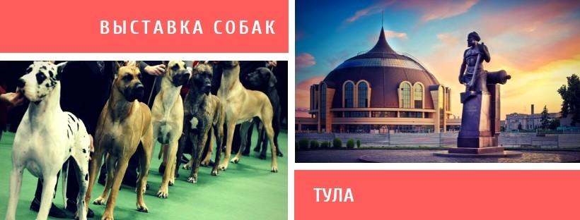 Выставка собак в Туле