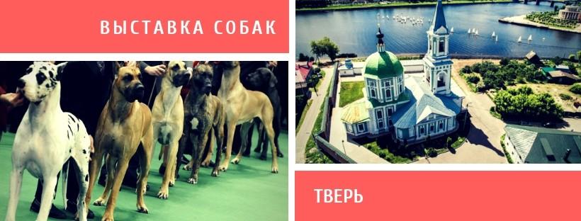 Выставка собак в Твери