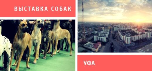 Выставка собак в Уфе