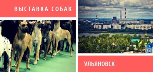 Выставка собак в Ульяновске