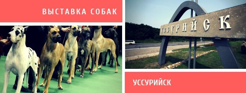Выставка собак в Уссурийске
