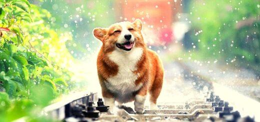 Защита собак от клещей_ таблетки, спреи, капли, ошейники - что лучше_