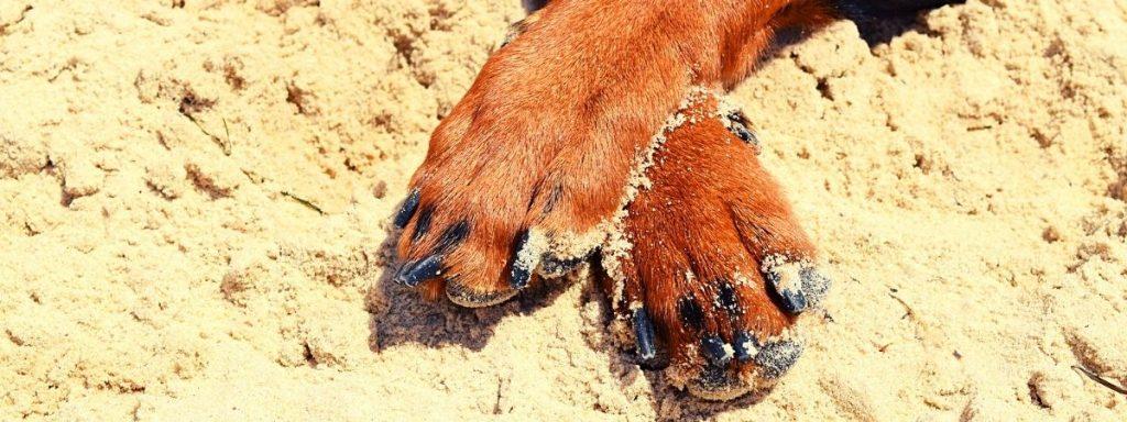 У собаки дрожат задние лапы